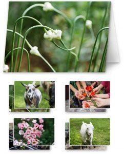 card set garden goats