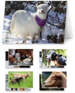 card set goats